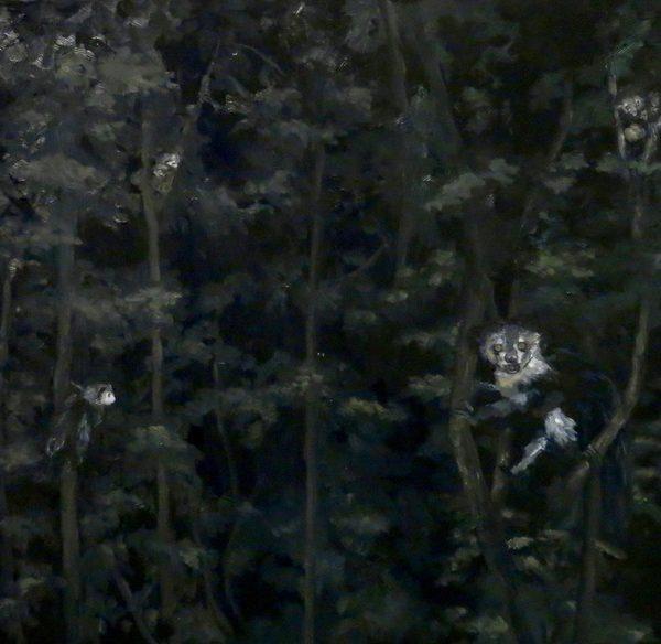 A Conspiracy of 6 Aye-aye Lemurs